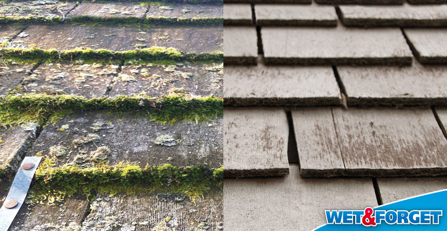 eliminate moss on roof