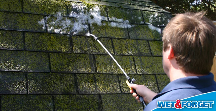 clean moss off roof shingles