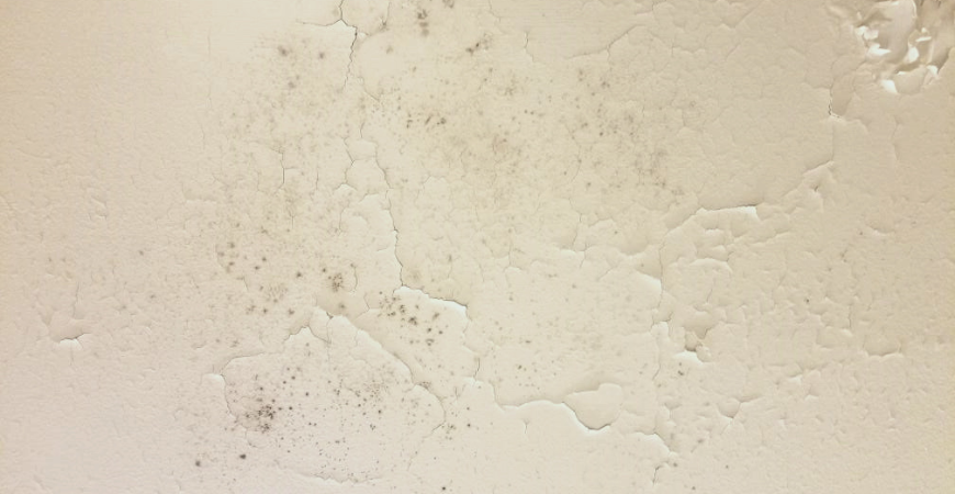 wipes out mold and mildew inside your home