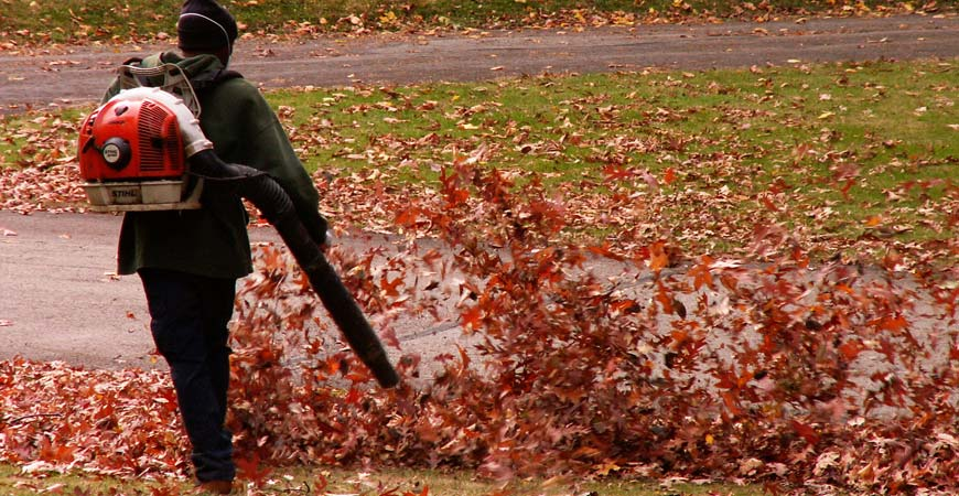 easiest ways to remove fall leaves