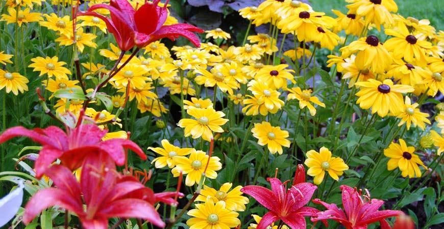 summer perennial flower garden