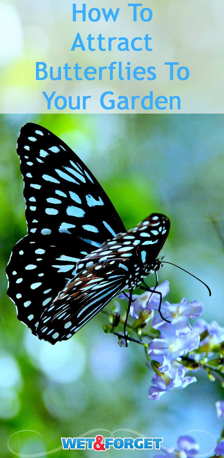 Ask Wet & Forget 4 Super Ways to Attract Butterflies--Let ...