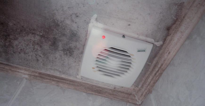 #1 bathroom mold cleaner