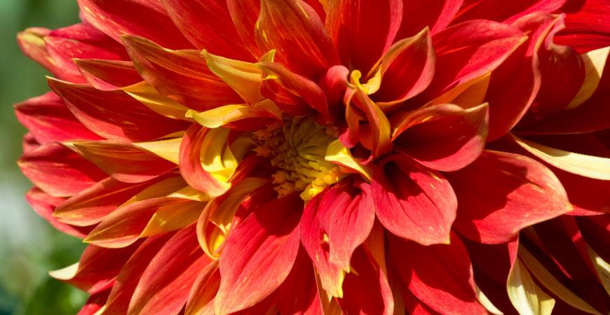 bodacious flower spotlight