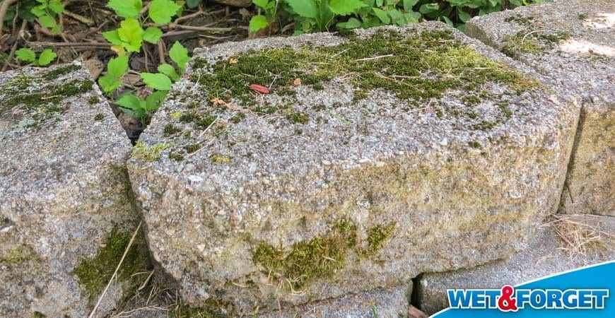 Ask Wet Forget Eliminate Ugly Moss The Easy Way With Wet