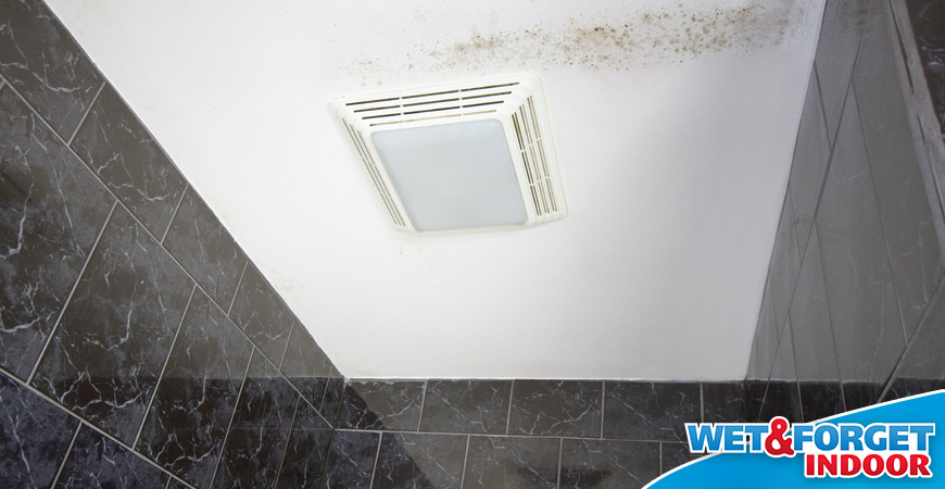 zaps mold and midlew in bathroom