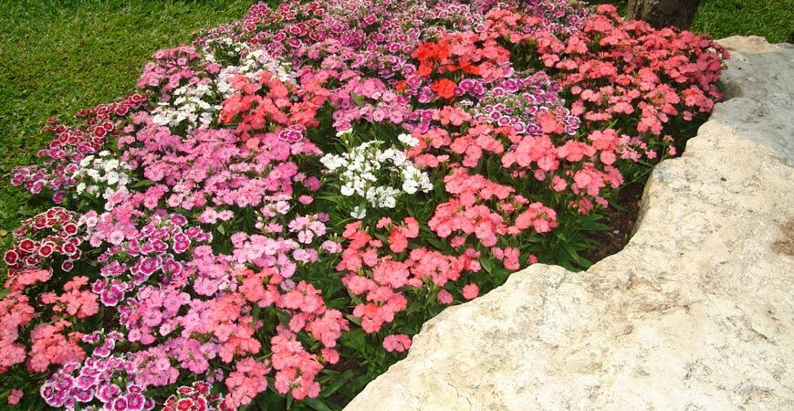 flowers in bloom in a garden