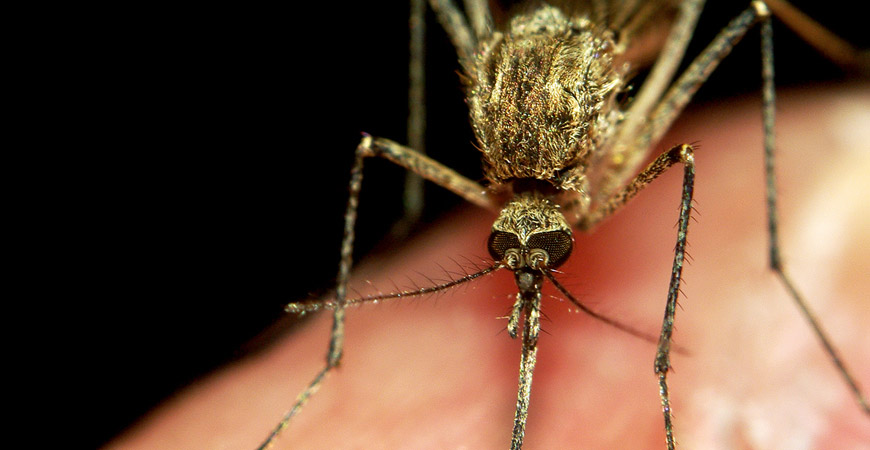 naturally repel mosquitos