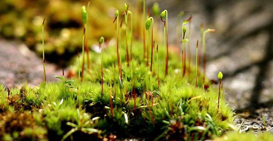 Ask Wet Forget Make Moss History This Spring With Wet Forget