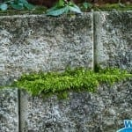 4 Places Where Wet & Forget Outdoor Makes Removing Moss Easy as Pie