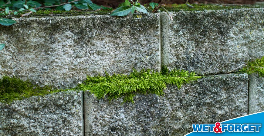 how to clean brick moss