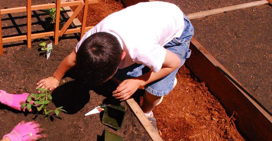 kid planting in garden