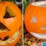 See the Best Pumpkin Preservation Trick
