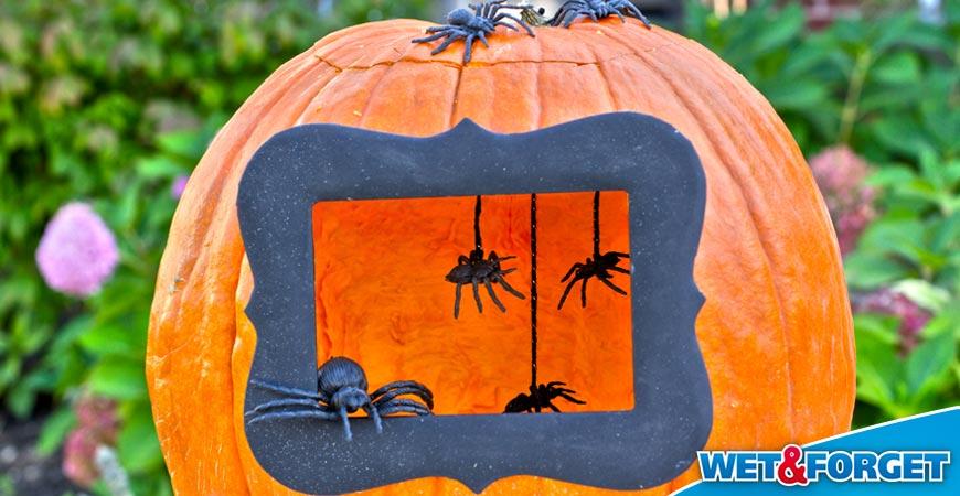 pinterest pumpkin ideas