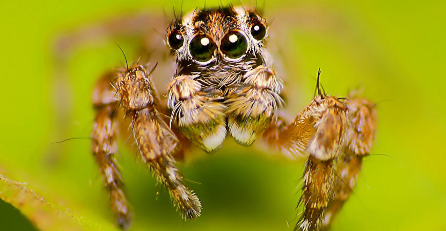 giant hairy spider