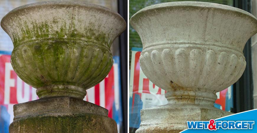 best product to remove algae