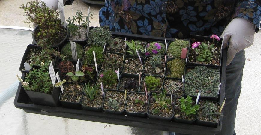 how to start a winter garden