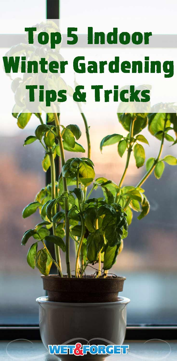 Keep your green thumb moving this winter with these 5 indoor winter gardening tips!