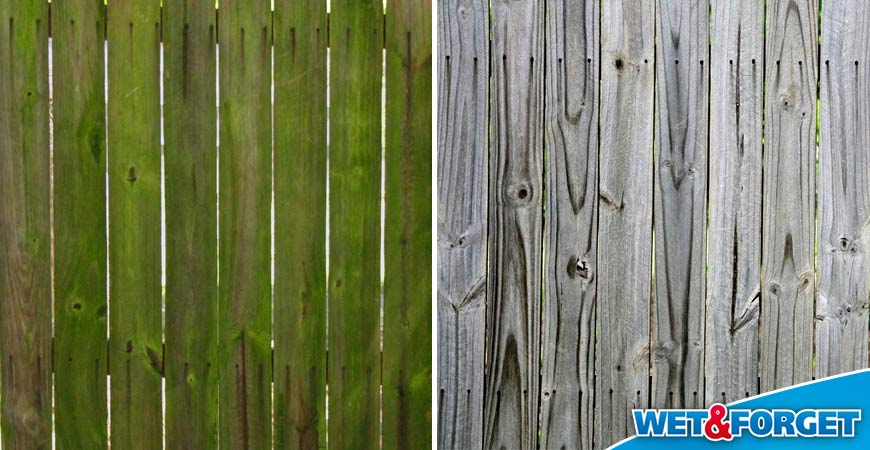 remove green on fence