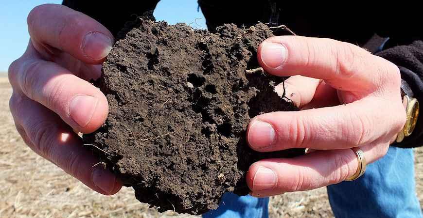 garden soil test