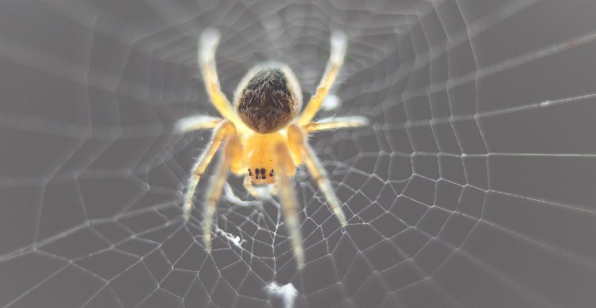 spider on a cobweb