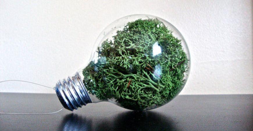 decorative moss in terrarium