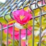 """Our 7 Favorite Climbing Plants to """"Wow"""" your Outdoor Space"""
