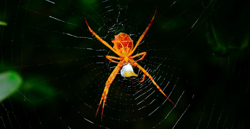 oragne spider hanging onto web