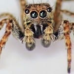 The Most Common House Spiders and How to Know if They're in Your Home
