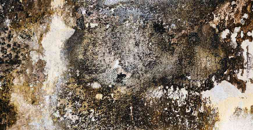 indoor mold growth can be dangerous