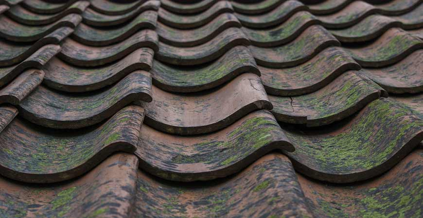 Wet & Forget eliminates ugly moss growth on roofs