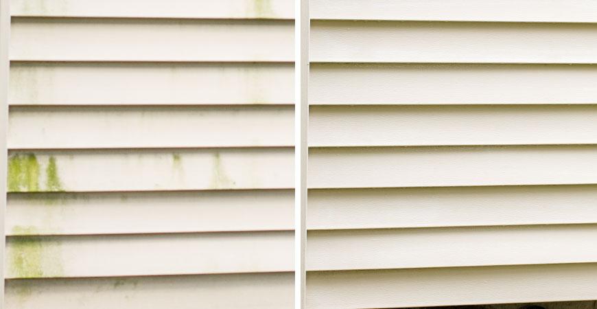 mold, mildew, and algae infestation on vinyl siding