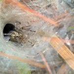 Venomous Spiders: Toxic Bites vs. Non-toxic Bites