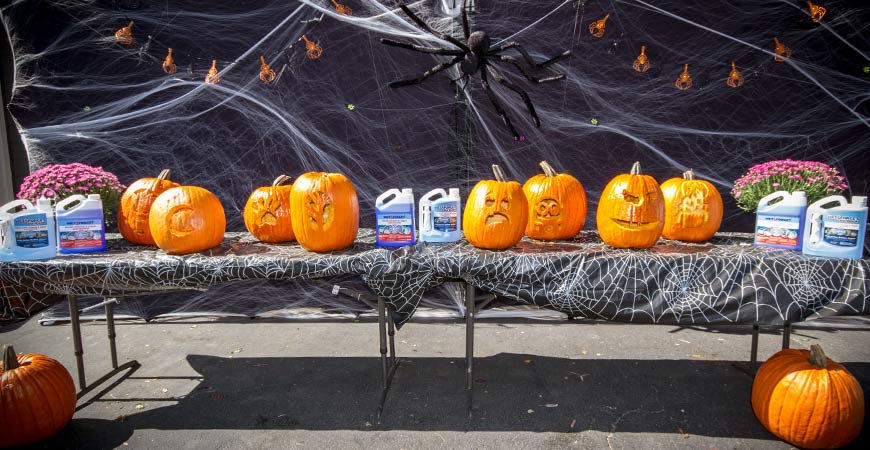 carving and preserving pumpkins with Wet & Forget