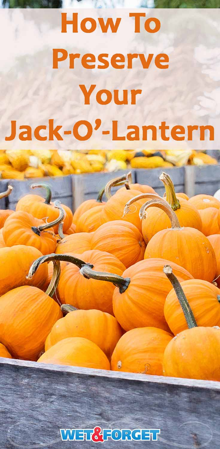Make your Jack-o'-lantern last up 2-3 weeks longer with this easy preservation method!