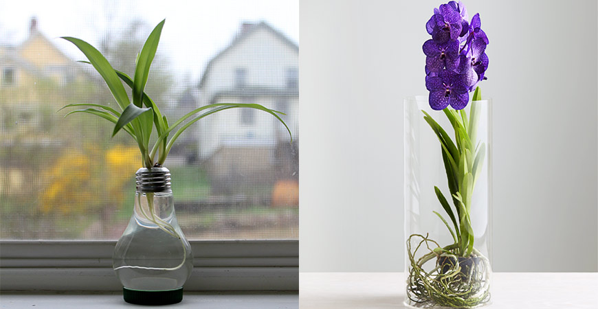 Two unique types of indoor water gardens