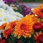 Late Summer Gardening Tips for the Home Gardener