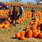 Pick the Best Pumpkin: How to Find the Right Pumpkin for Your Needs