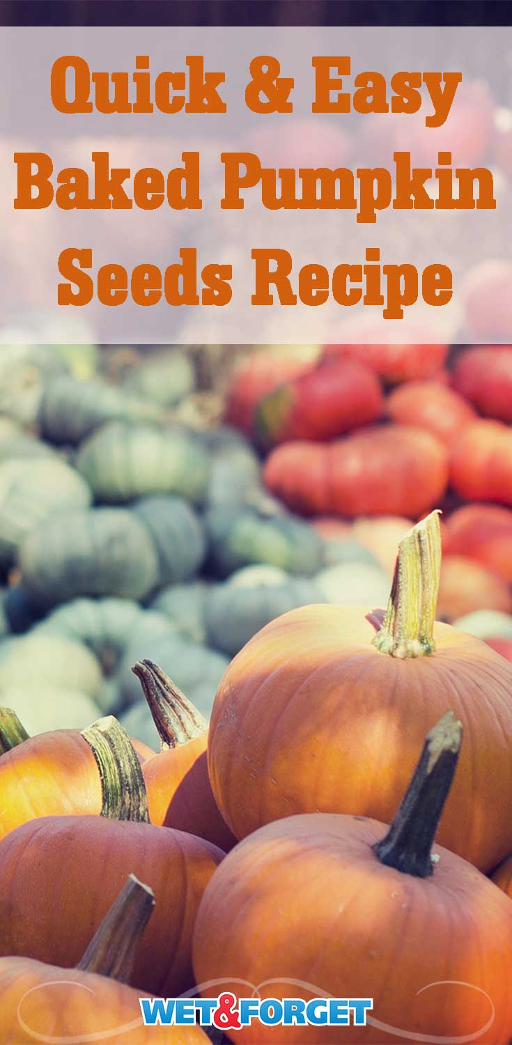 Looking for a new fall recipe? Try out this easy and nutritious baked pumpkin seeds recipe!