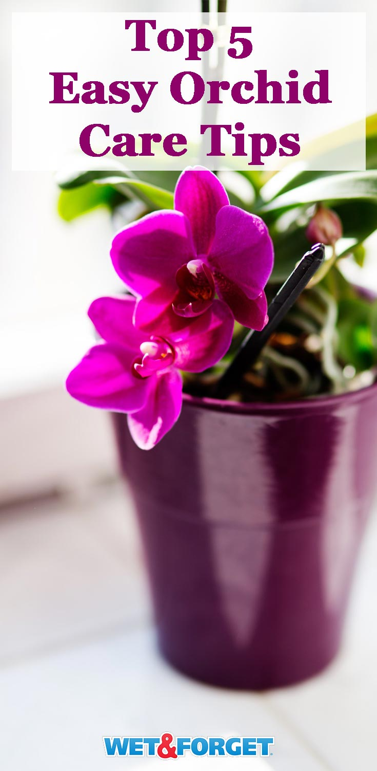 Thinking of getting an orchid soon? Read up on these easy care tips first!