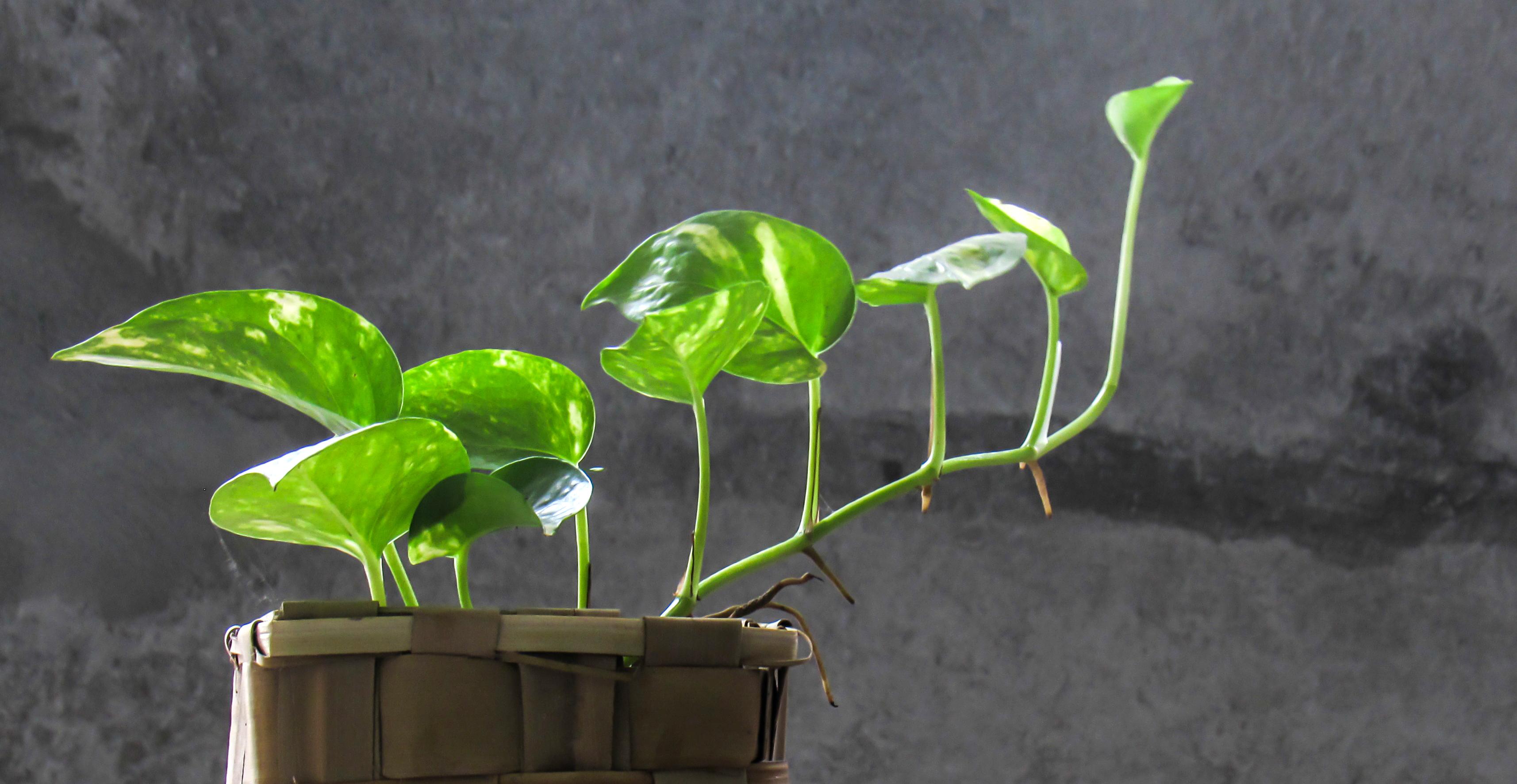 common houseplant problems