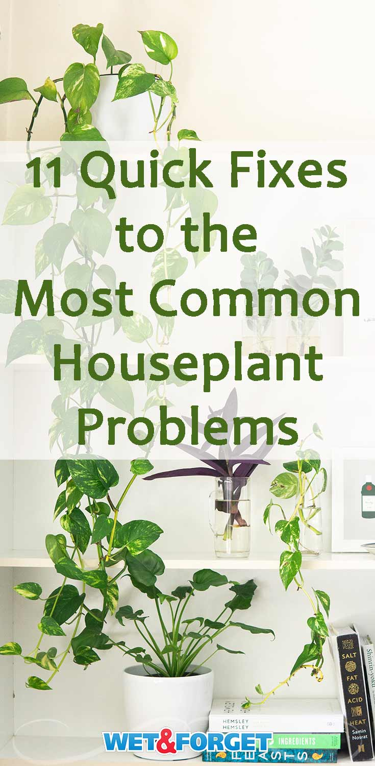 Is your houseplant looking a little droopy? Do you think your houseplant has pests? Solve the most common houseplant problems with these quick fixes!