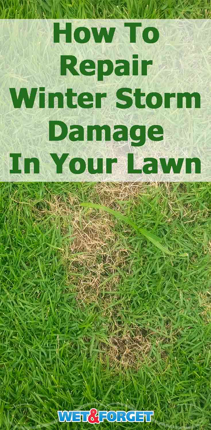 Is your lawn not looking too great now that the snow has melted? Learn how to repair it easily with these tips!
