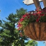 Top Tips for Creating Fabulous Hanging Planters