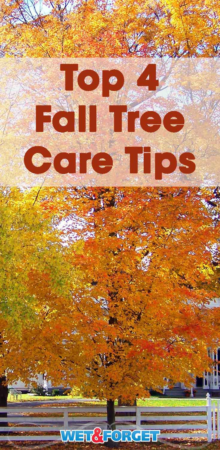 Make sure your trees are ready for the first frost with these fall tree care tips!