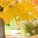 Fall Tree Care Tips – How to Prep Your Trees for Winter's Freeze