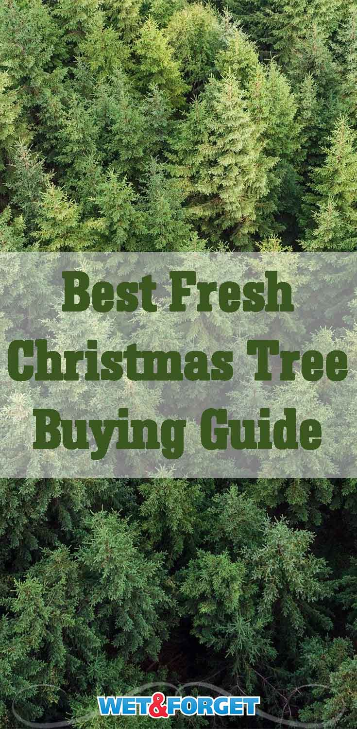 December is here and it's time to buy a Christmas tree! Read up on our guide to pick out the best tree for your home.