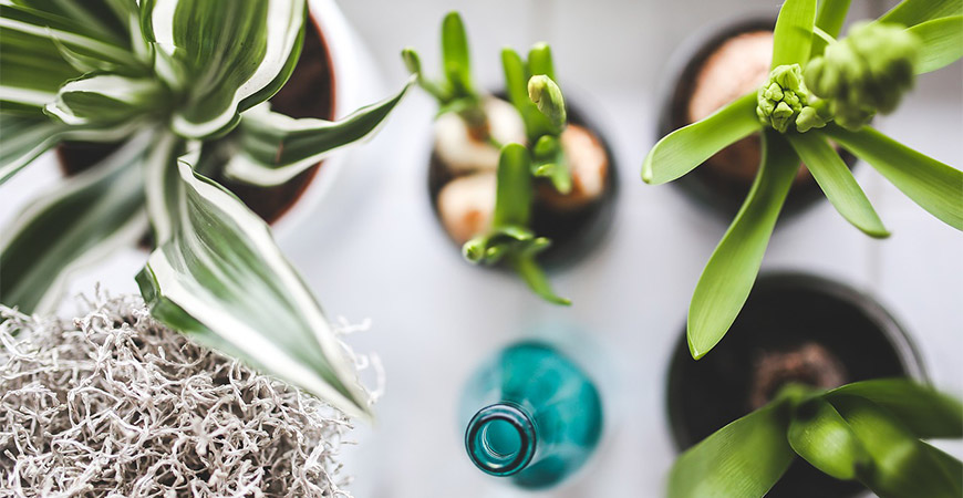 Popular Small Indoor Plants and How to Care for Them