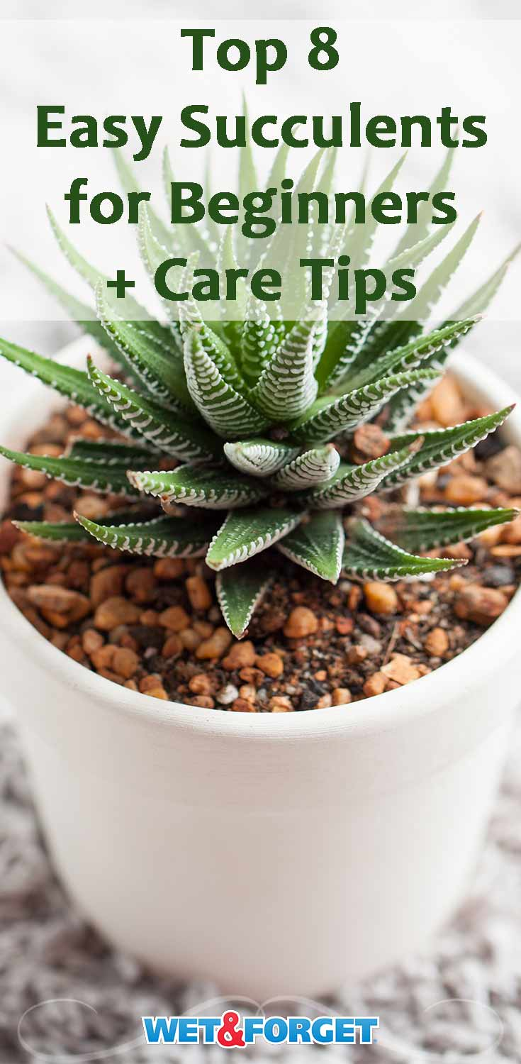 Learn how to start your succulent garden with this beginner guide!
