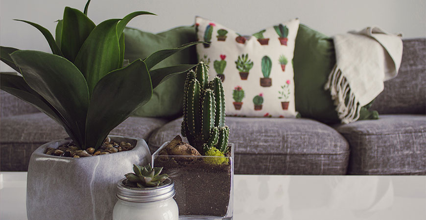 Change up the look of your indoor plants with these home decor tips!